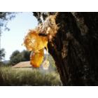 Mirha illóolaj  (Commiphora molmol) 5 ml (42)