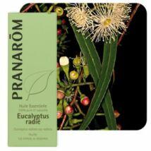 Eucalyptus radiata illóolaj (10 ml) (62)