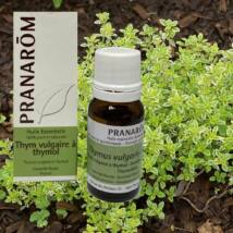 Kakukkfű (Thymus vulgaris ct. Thymol) 10ml (70)