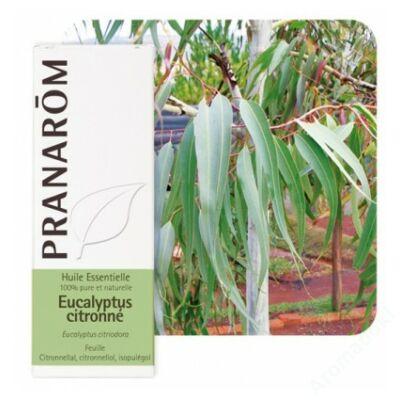 Vietnámi eucalyptus illóolaj -Eucalyptus citriodora (10ml) (58)