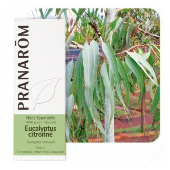 Vietnámi eucalyptus illóolaj -Eucalyptus citriodora (58)