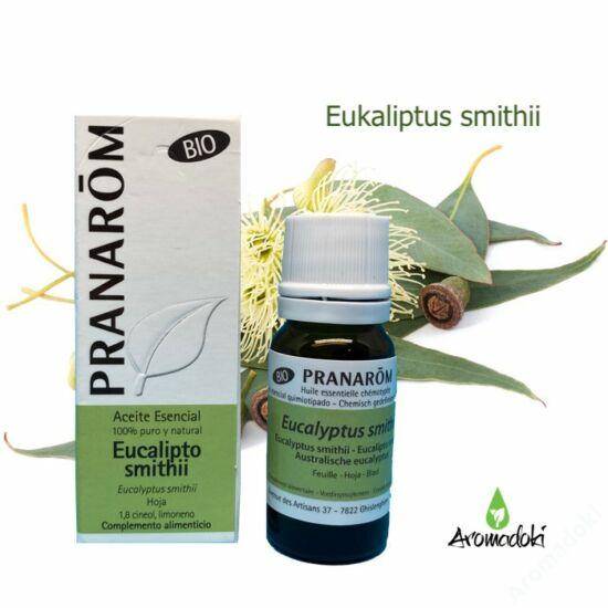 Eukaliptusz  smithii (13)