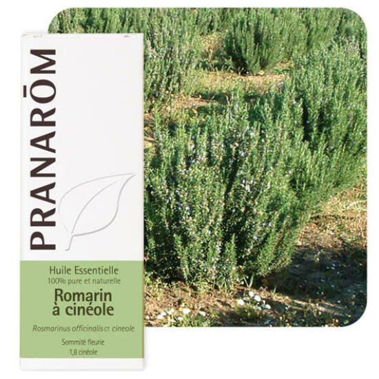 Rozmaring (Rosmarinus officinalis ct. cinéol) 10 ml (67)