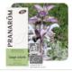 Muskotályzsálya illóolaj (Salvia sclarea) (64)