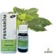 Ravintsara - Cinnamomum camphora - ct cinéole (38)
