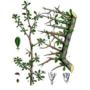 Kép 3/4 - Mirha illóolaj  (Commiphora molmol) (42)