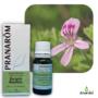 Kép 1/4 - Bourbon geránium, geranium, aromadoki