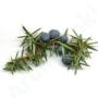 Kép 3/3 - Boróka (Juniperus communis) (11)